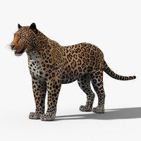 cat leopard feline 3d 3ds