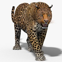 3d leopard cat animation