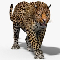 3d leopard cat animation model