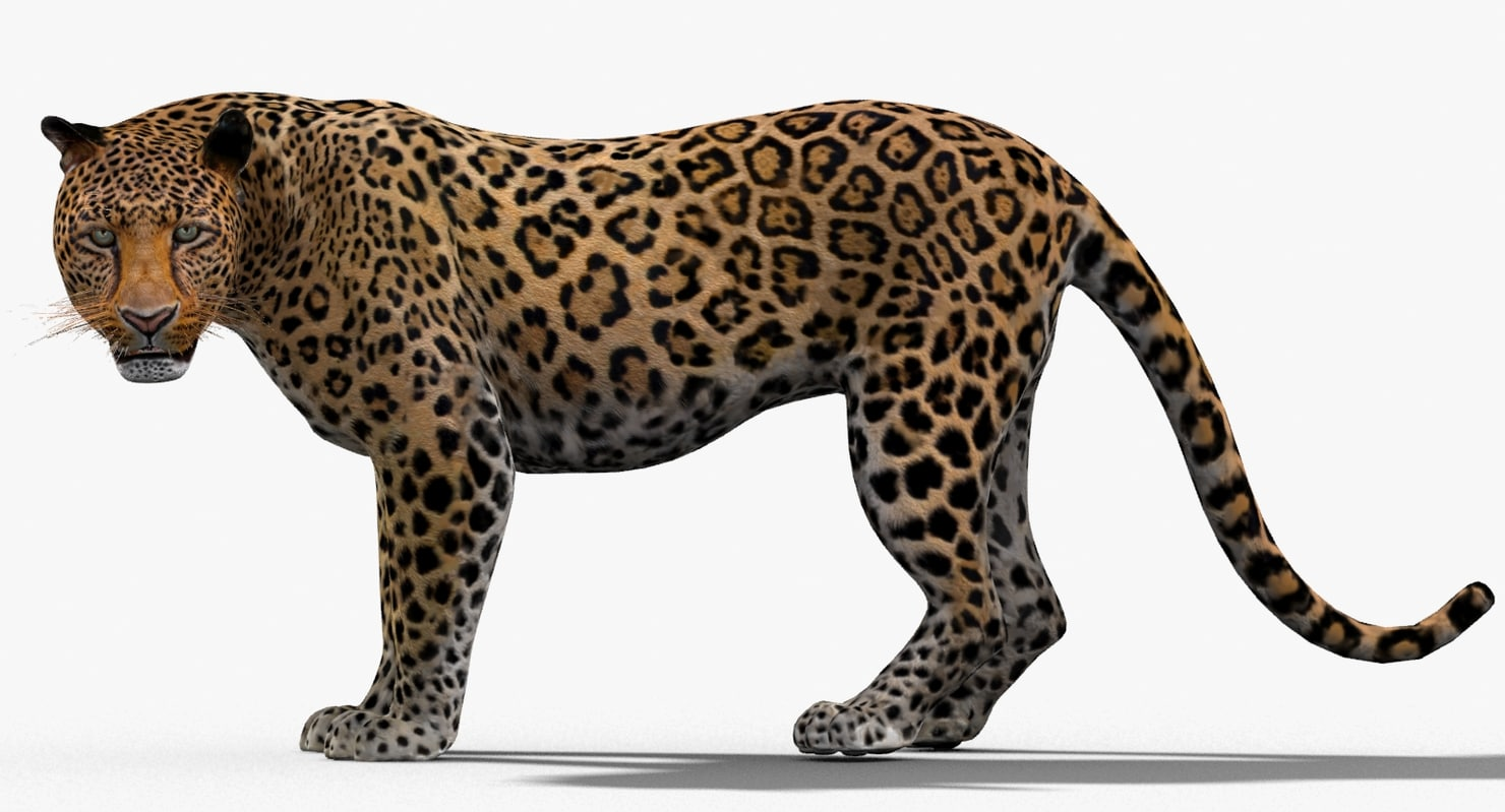 Leopard-3D-model-animated-02.jpg
