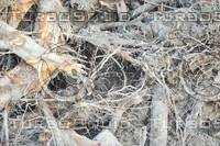 Root_Texture_0001