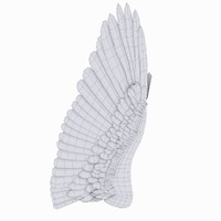 Eagle wing Model
