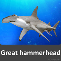 3ds realistic male great hammerhead shark