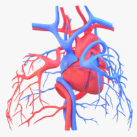 heart circulatory 3d obj