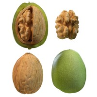 nut walnut 3d model