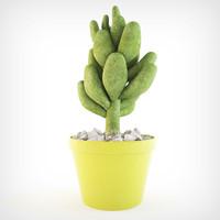 3d model plants stonecrop