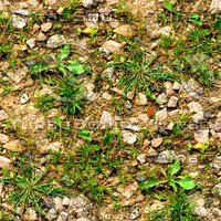 Rocky ground with weeds 2
