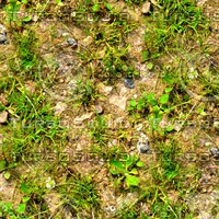 Rocky ground with weeds 3