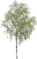 Birch 03 HD