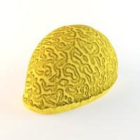 coral fish sea 3d model
