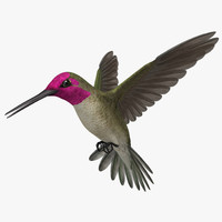 3d model of calypte anna s hummingbird