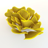 yellow coral 3d model