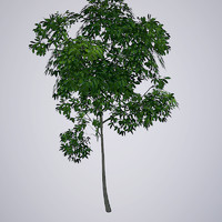 maya gaming tree