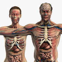 3d male female anatomy body model