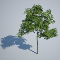 3d tree gaming opacity model