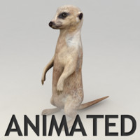 Meerkat Animated