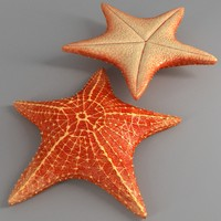 starfish star 3d max