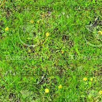 Grass with dandelions 2
