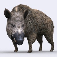 3DRT - Wild Animals - Boar