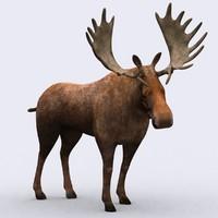 wild animal - moose 3d model