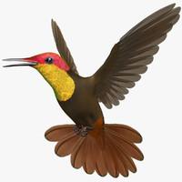 chrysolampis mosquitus ruby-topaz hummingbird obj