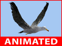 rigged seagull loop animation 3d max