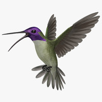 3d model calypte costae s hummingbird