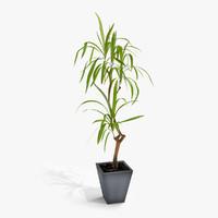 3d model dracaena plant flower