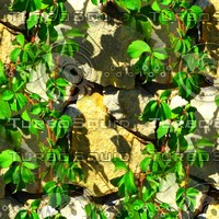 Stone wall with vine 15