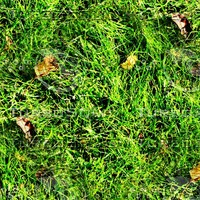 Grass with autumn leaves 42