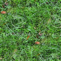 Grass with autumn leaves 43