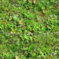 Grass with autumn leaves 41