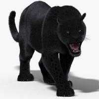 black panther fur cat 3d model