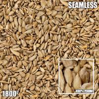 Seeds 01