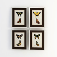 eichholtz prints ec188 butterfly 3d 3ds
