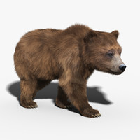 brown bear fur rigged 3d model