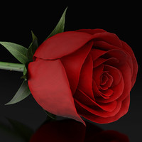 3d ma red rose