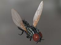 house fly 01 3d model