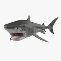 tiger shark pose 2 3d model