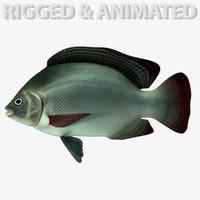 tilapia fish 3d max