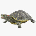 Red-eared Slider 3D models