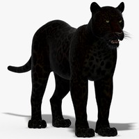 3ds max panther black animal
