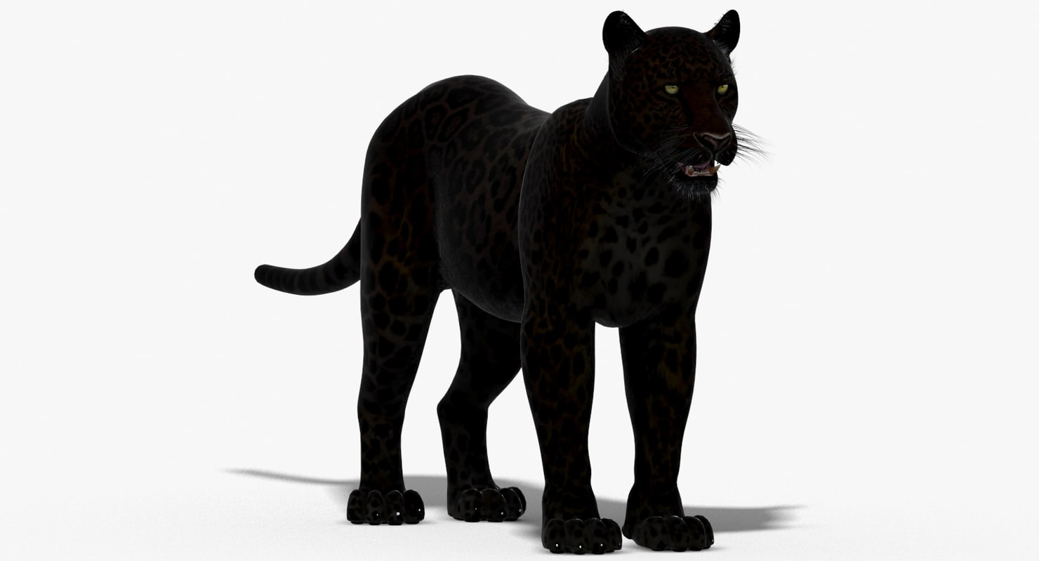 Panther-3D-model-animated-01.jpg