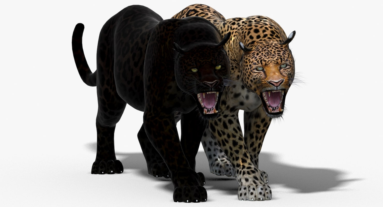 Leopard-3D-model-animated-01.jpg