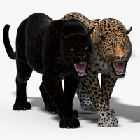 3d model panther leopard cat animation