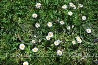 Grass_Texture_0008