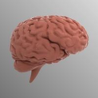 obj human brain
