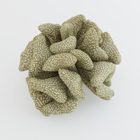 3ds max coral