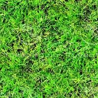 Grass 43
