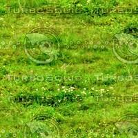 Grass 44